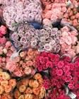 Наш Цветочный ковёр!